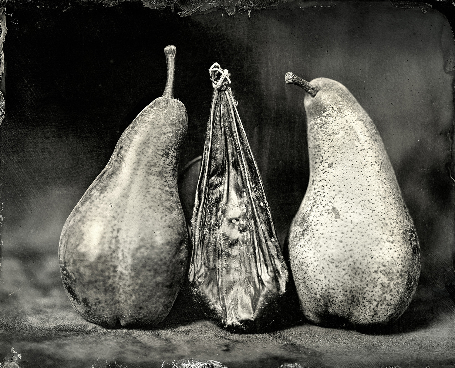 Bear Gallbladder with Bosc Pears, 2018, 8x10 inch Tintype