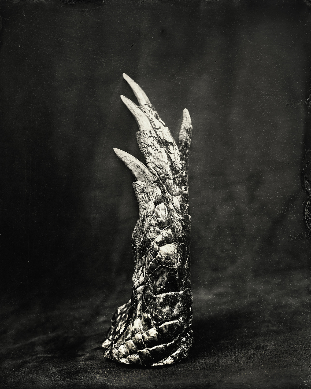 Crocodile Claw, 2018, 8x10 inch Tintype