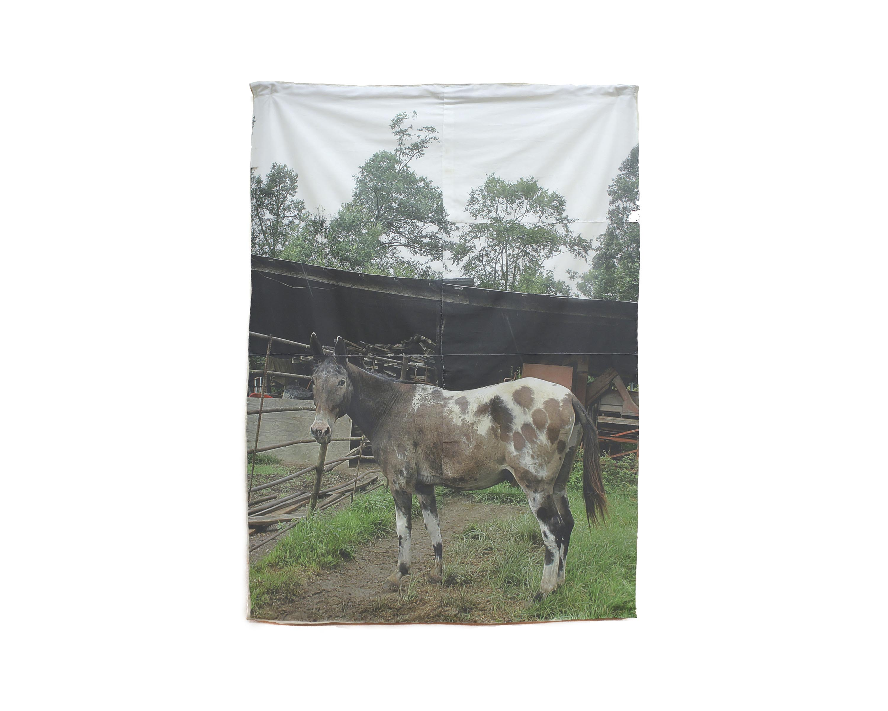 "…And a Mule. 2017 pigment print on fabric 61 ½"" h x 45"" w"