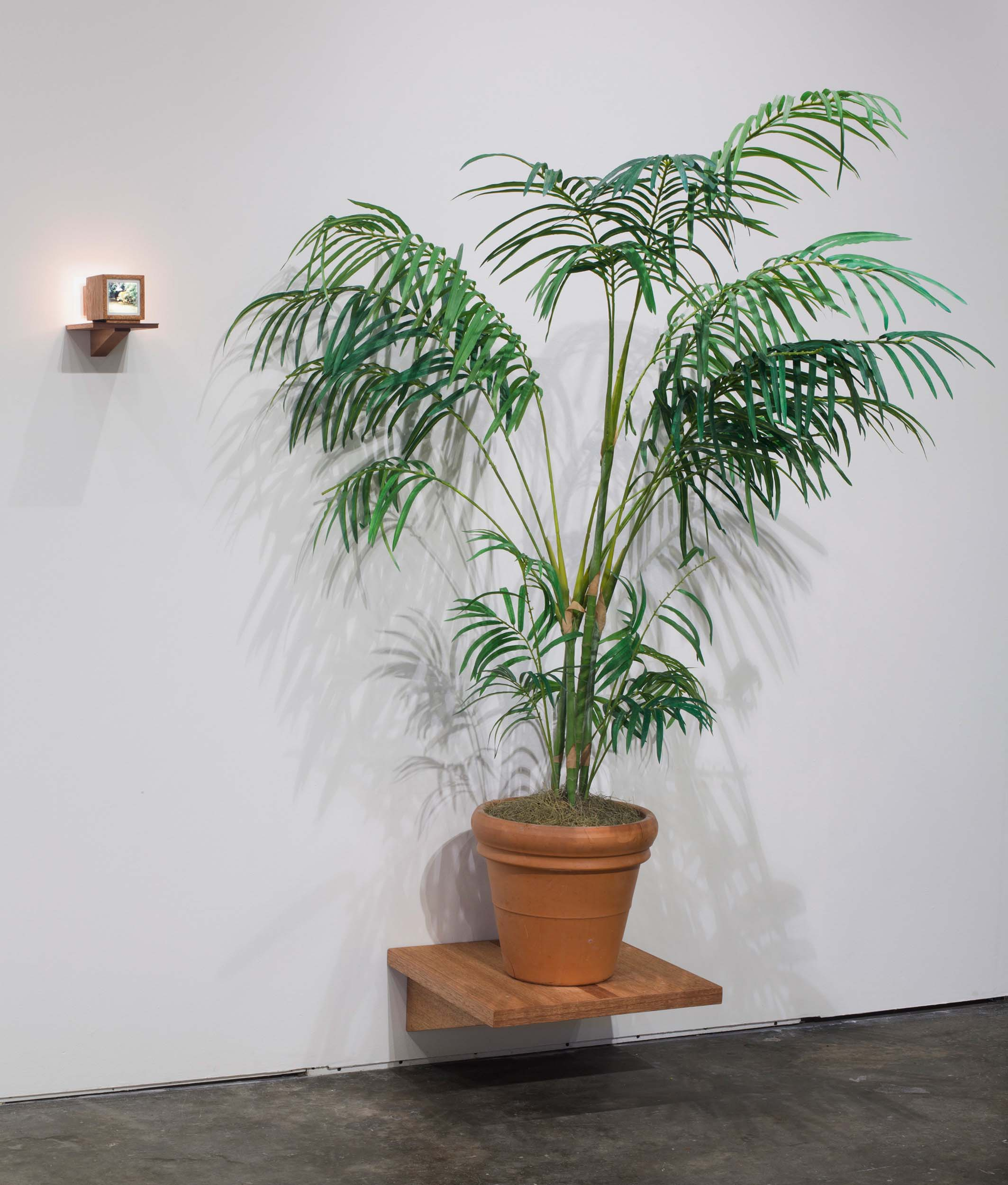 "Mark Baugh-Sasaki, Between Two Palms Medium format slide, Plastic palm tree, wood, glass, LED light, Installation: 72"" x 48"" x 16"", Individual elements: lightbox and shelf – 9"" x 6"" x 7"", Palm tree and shelf – 60"" x 18"" x 18"""